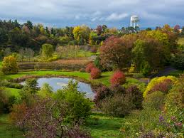 View from the west side of the F. R. Newman Arboretum